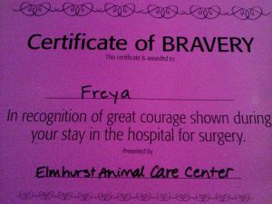 A Certificate of Bravery for the little dog who had a brush the death days earlier and was now well enough to go home!